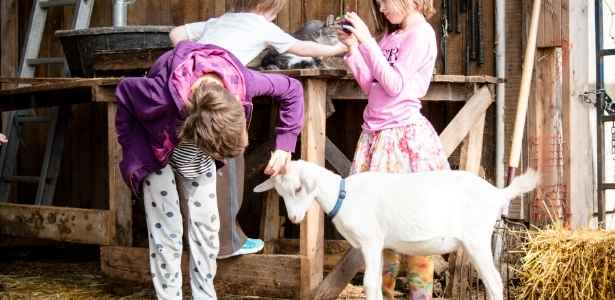 3 farm girls doing chores with their goats