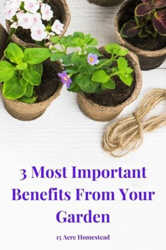 There are so many benefits from your garden you probably aren't aware of. Learn some of them to take advantage of your plot of land.