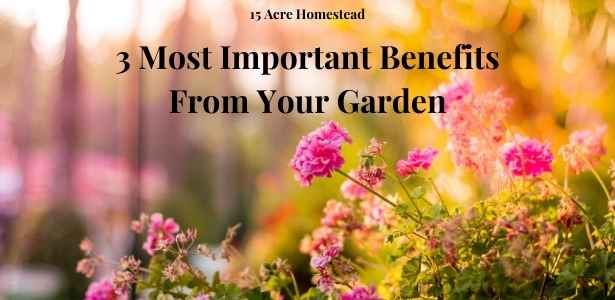 benefits from your garden featured image