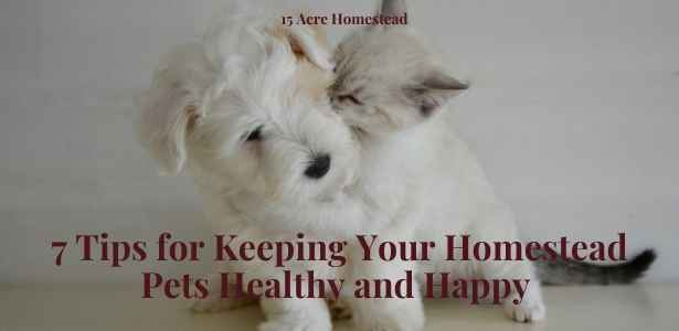 homestead pets featured image