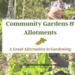 community garden and allotment