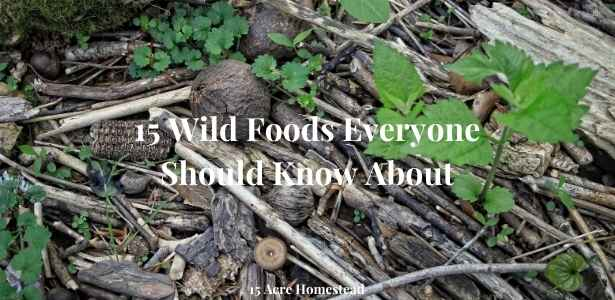 wild foods featured image