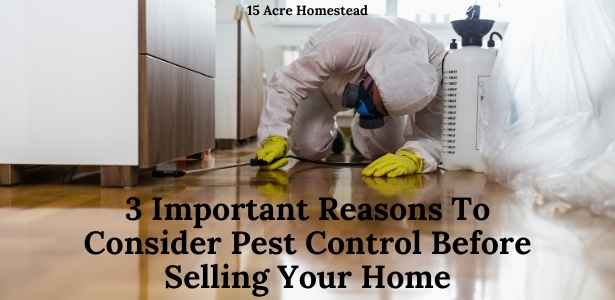 consider pest control featured image