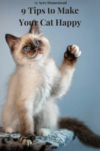 Use these 9 easy to follow tips to learn how to make your cat happy!