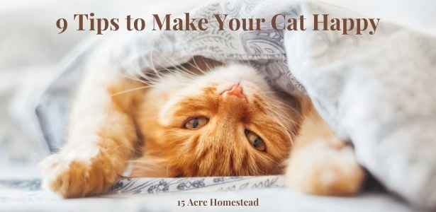 make your cat happy featured image