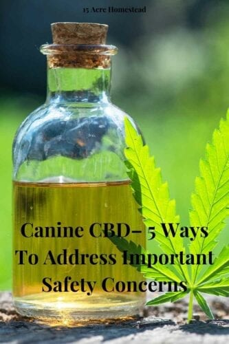 CBD can be a life-changing aid for canine and owners, but you have to go the extra mile with safety. Following these recommendations ensures both safety and the best outcomes.