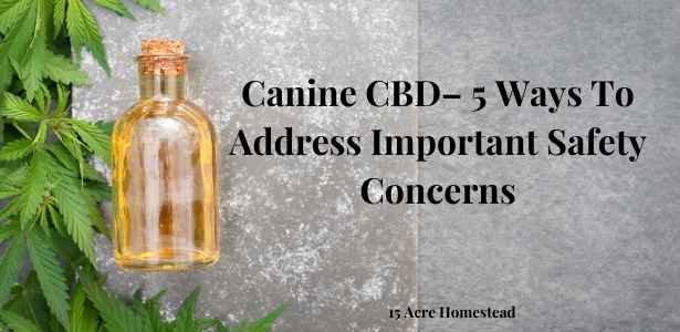 Canine CBD featured image