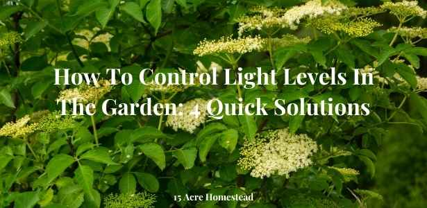 Control light levels featured image