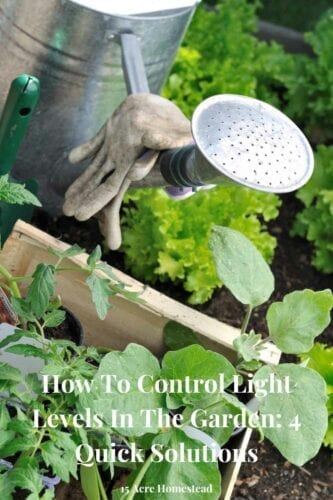 One of the main things that all plants need is a good amount of light levels. By giving each plant in your garden exactly what it needs, it is much more likely to thrive, and your garden will therefore be so much more likely to look its part.
