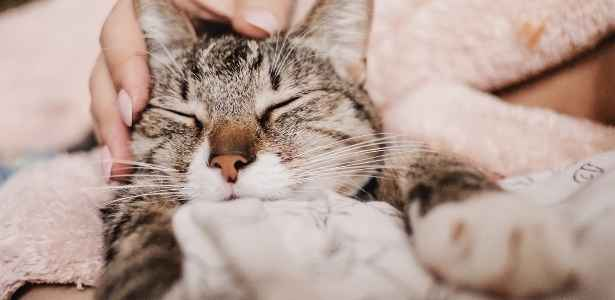 sleeping cat while being petted