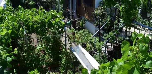 Wild foods growing in residential garden