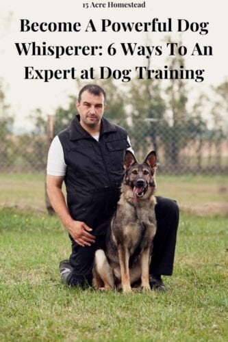 If you love dogs and are very passionate about animal behavior, working as a dog whisperer may be just the right fit for you. However, being a professional dog trainer requires a lot of hard work.