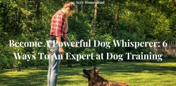Dog Whisperer featured image