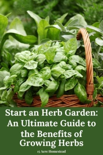 When you start an herb garden on your homestead you will create a means to provide not only culinary flavors to add to your daily meals but also the ability to dye cloth, heal the sick, boost your family's health, perfume your body and house and add a source of food for wildlife pollinators.