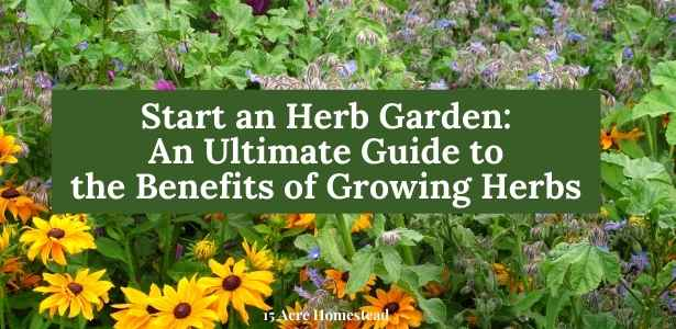 start an herb garden featured image