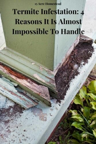 A termite infestation is among the toughest enemies that homeowners have to handle. Getting rid of them can be an ordeal, and there are chances they will come back. Let us explain why termite infestation is the hardest to deal with.