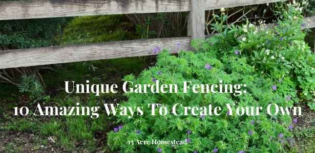 garden fencing featured image