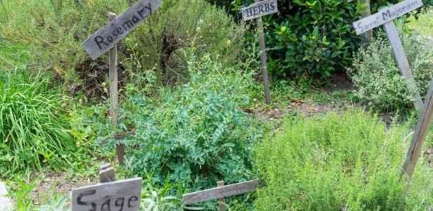 herb garden where needs of plants are met