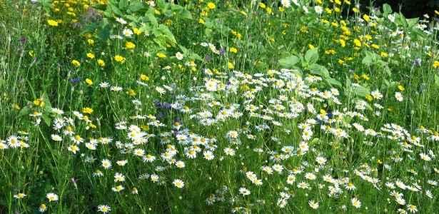 herb garden to attract pollinators