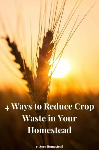 Food waste in the United States is estimated at between 30-40% of the supply, 60% of which could have been avoided if people would learn ways to reduce crop waste.