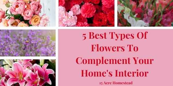 Flowers featured image