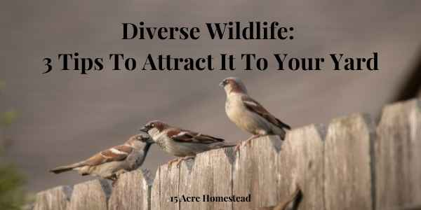 diverse wildlife featured image