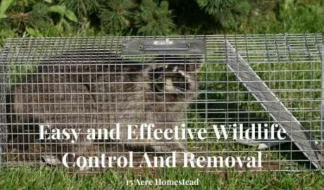 wildlife control and removal featured image