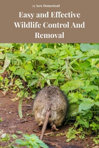 A variety of methods are used for wildlife control and removal of human property. Since wildlife around humans can be a nuisance and dangerous at times, too, they need to be safely removed.