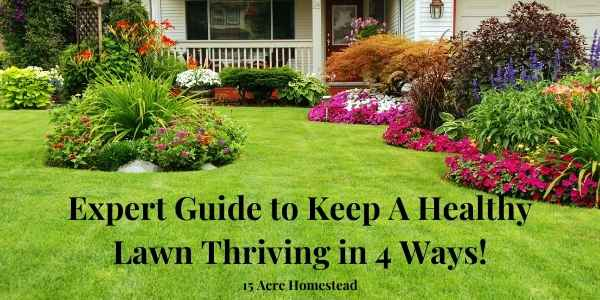 healthy lawn featured image