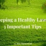keeping a healthy lawn featured image