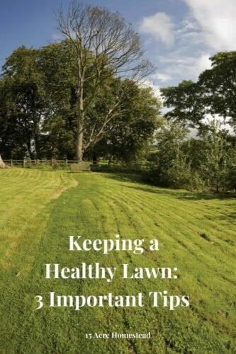 Keeping a healthy lawn and having a safe yard requires you to think outside the box. Not every homeowner will face the same challenges, depending on where you live.