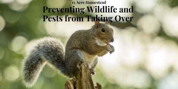 wildlife featured image