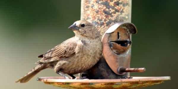 Birds at a feeder