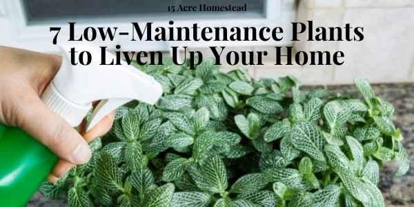 low-maintenance plants featured image