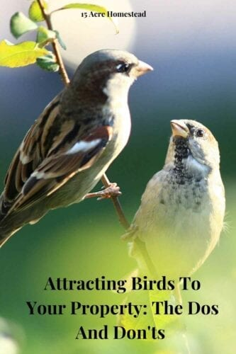 If you really want to attract more birds to your garden, it's a good idea to provide them with the shelter they can use immediately (instead of having to build it themselves).
