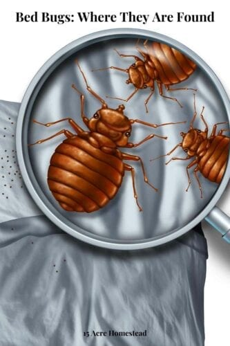 Worrying is not the solution for eliminating bed bugs. You must act now and keep your homes clean and fresh.
