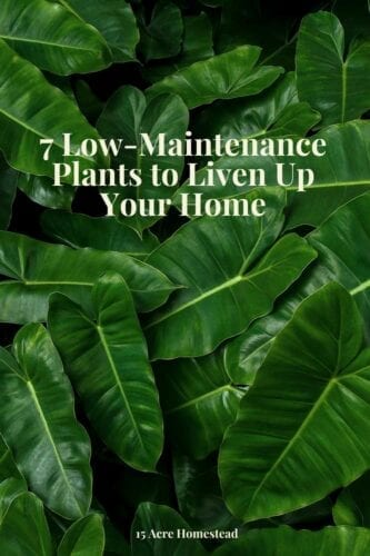 Learn about 7 low-maintenance plants you can grow in your home you may never have heard of and test your green thumb.