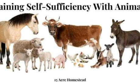 gaining self-sufficiency with animals featured image