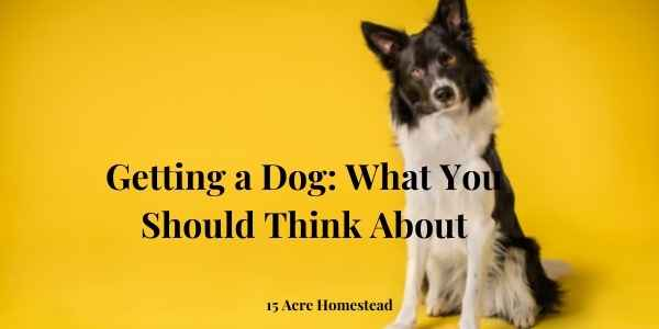 getting a dog featured image'