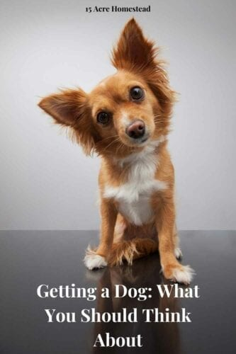 It's very important to think it through carefully before you commit to getting a dog, or any pet, for that matter.
