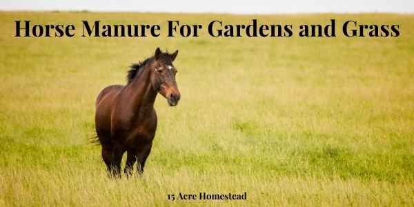 horse manure featured image