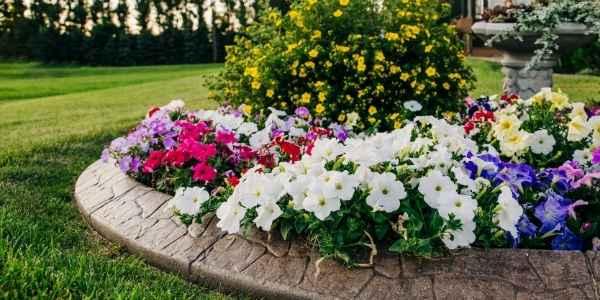 flower bed in yard
