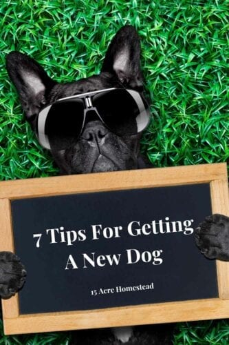 Getting a new dog is a big responsibility and undertaking. Your new dog is relying on you to provide it with a comfortable and rewarding home to live in.