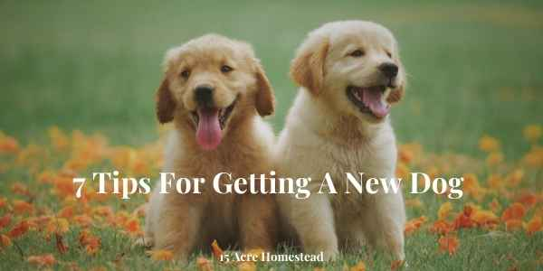 getting a new dog featured image