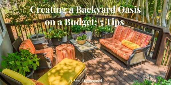 backyard oasis featured image