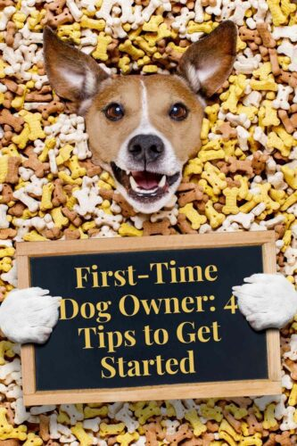 There's no doubt that being a first-time dog owner is one of the most exciting times in your life but it can also be pretty stressful! If you want to get things off to a good start for you and your pup, be sure to prepare in advance.