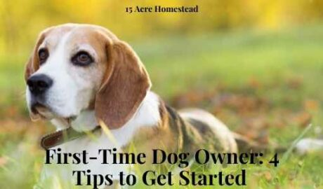 first-time dog owners featured image