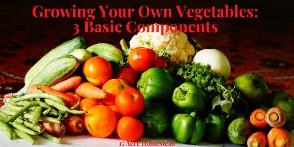 Growing your own vegetables featured image