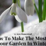 garden in winter featured image