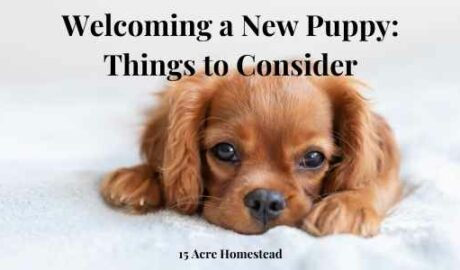 welcoming a new puppy featured image